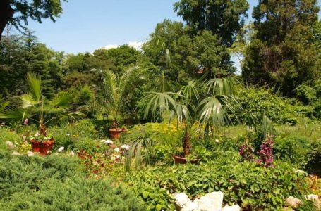 Gradina Botanica Dimitrie Brandza